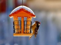 Кормушка для птиц — обзор идей для постройки кормушек и скворечников своими руками (135 фото и видео)