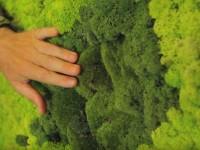 Декоративный мох: подробный мастер-класс как выбрать и использовать в ландшафтном дизайне (140 фото)