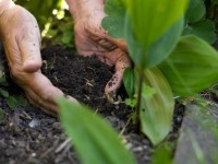 Как удобрить землю — 105 фото и видео описание внесения удобрений на придомовом и садовом участке