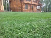 Рулонный газон — 120 фото основных видов и пошаговое описание благоустройства при помощи рулонного газона