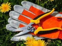 Садовый секатор — особенности выбора инструмента и лучшие производители секатора (155 фото)