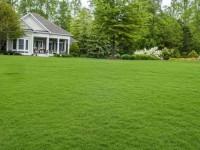 Трава для газона — советы по выбору сорта, правила укладки и особенности выращивания (150 фото)