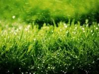 Уход за газоном — практичные методы применения и способы оформления при помощи газона (115 фото и видео описание)