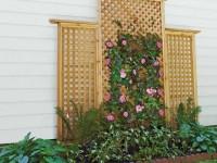 Вертикальное озеленение — 135 фото красивых идей и видео описание как правильно сделать вертикальное озеленение