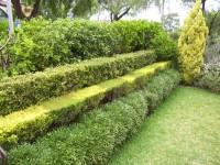 Живая изгородь: особенности формирования, выбор растений и применение в ландшафтном дизайне (105 фото)