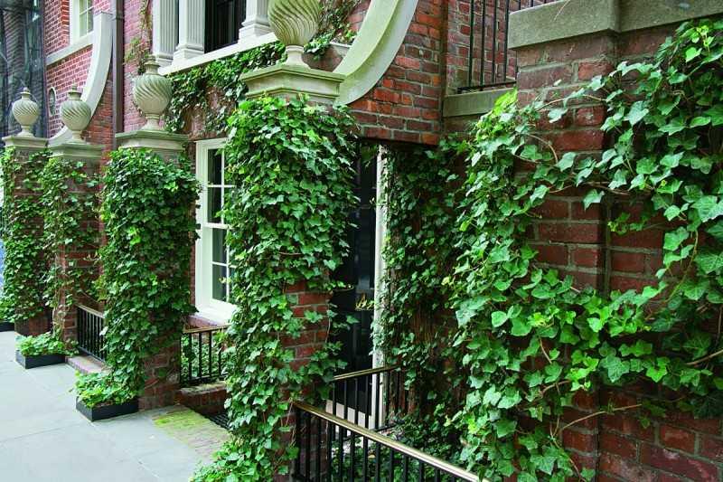 Вьющиеся комнатные растения (62 фото): вьюн и лиана для дома, плетущаяся спаржа и другие виды. Как они выглядят? Уход в домашних условиях