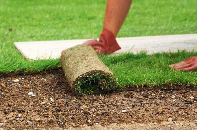 благоустройство и озеленение земельного участка курсовая работа